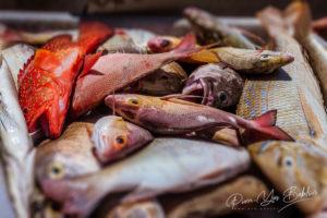 Heap of freshly caught fish