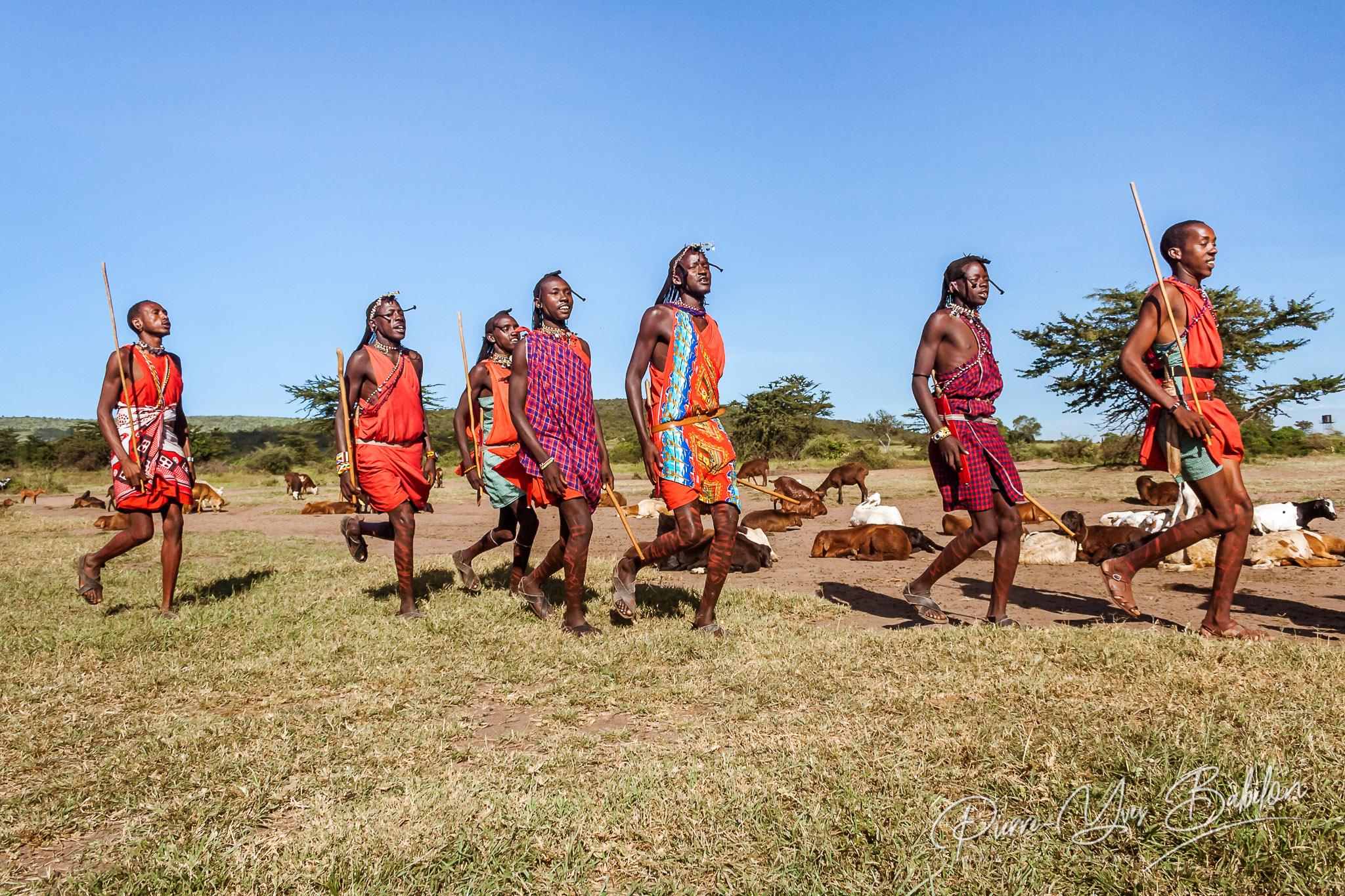 Guerriers masaï du Kenya lors d'une cérémonie près de leur troupeau de chèvres