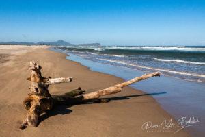 Vieille souche d'arbre sur la plage de Fort Dauphin, Madagascar