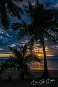 Coucher de soleil sur les palmiers de l'île de Nosy Be, au nord de Madagascar