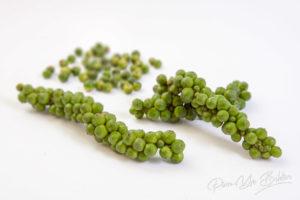 Grains de poivre vert frais