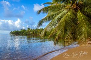 Végétation luxuriante avec palmiers immergés sur l'île de Sainte-Marie, Madagascar