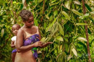 Une cultivatrice malgache et son fils dans sa plantation de vanille à l'est de Madagascar