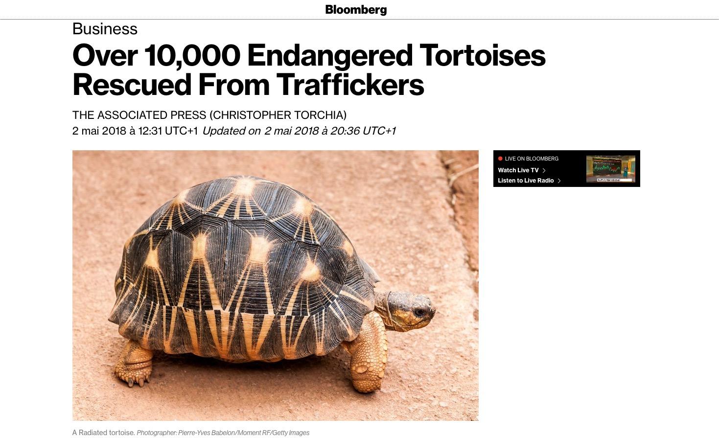 Bloomberd article tortues radiata en danger. Photo Pierre-Yves Babelon.