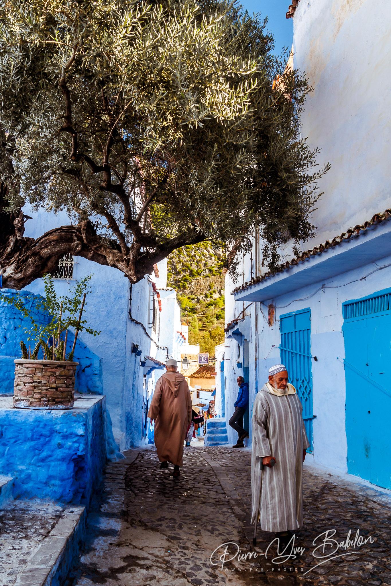 Marocains sous l'olivier dans la medina de Chefchaouen, Maroc