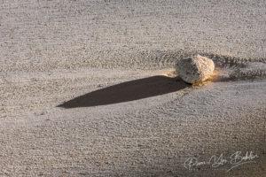 Caillou de corail mort