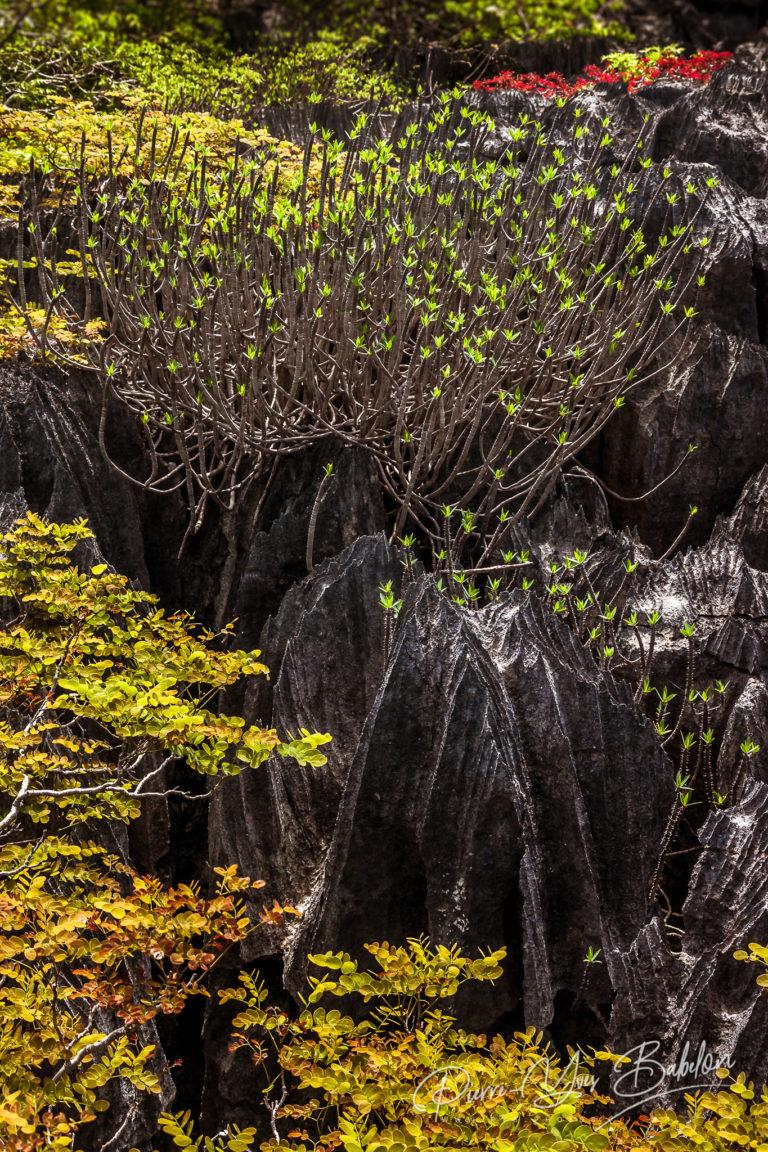 Tsingy of Ankarana Madagascar