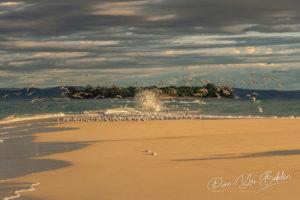 Envol de sternes sur le banc de sable de Nosy Iranja près de Nosy Be, Madagascar