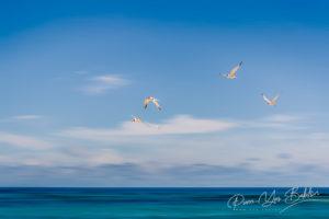 Vol de sternes près de Nosy Be, Madagascar